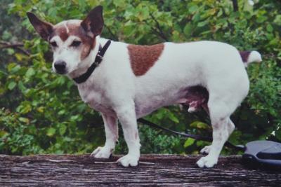 Hund Samson (c) Dr. Ada von Kriegsheim